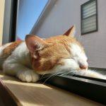 睡眠は時間よりも質!すっきり起きるために寝る前にやること